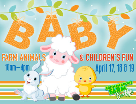 Baby Farm Animals 2020 at Aviator