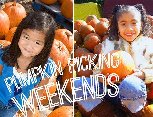 Pumpkin Picking Weekends GMF